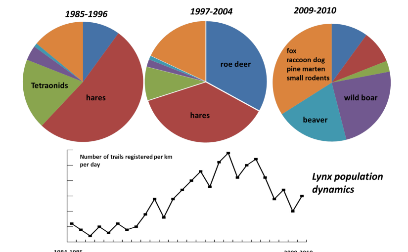 Lynx population dynamics in relation to prey supply and diet (Paazierrie Forest)